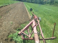 Cover Crop Plow Down